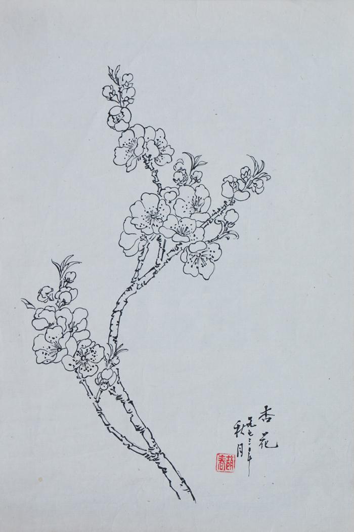 杏花的手绘图片